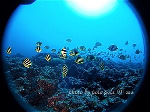 f:id:polepole-at-sea:20191209012025j:plain