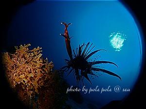 f:id:polepole-at-sea:20191209012059j:plain