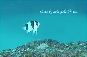 f:id:polepole-at-sea:20200114095144j:plain