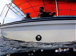 f:id:polepole-at-sea:20200121111411j:plain