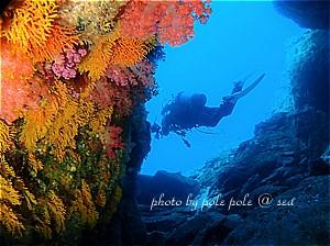 f:id:polepole-at-sea:20200209124840j:plain