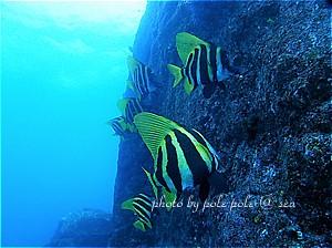 f:id:polepole-at-sea:20200209125109j:plain