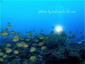 f:id:polepole-at-sea:20200216124059j:plain