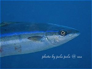 f:id:polepole-at-sea:20200301221227j:plain