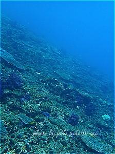f:id:polepole-at-sea:20200319125959j:plain