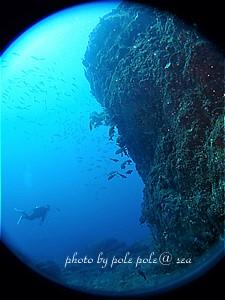 f:id:polepole-at-sea:20200321231350j:plain