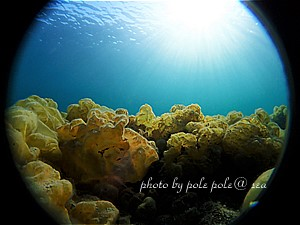 f:id:polepole-at-sea:20200324225352j:plain