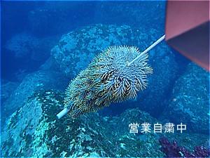 f:id:polepole-at-sea:20200525203437j:plain
