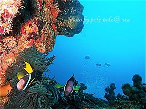 f:id:polepole-at-sea:20200702225228j:plain