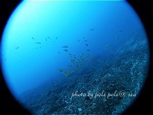 f:id:polepole-at-sea:20200705182346j:plain
