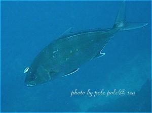 f:id:polepole-at-sea:20200705182610j:plain