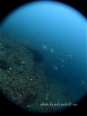 f:id:polepole-at-sea:20200718220837j:plain