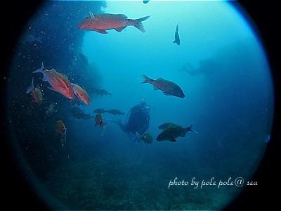 f:id:polepole-at-sea:20200722223441j:plain