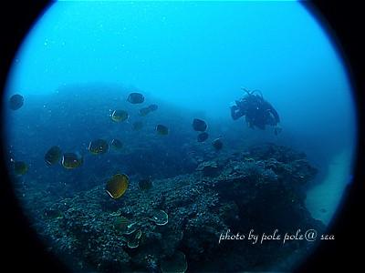 f:id:polepole-at-sea:20200722223539j:plain