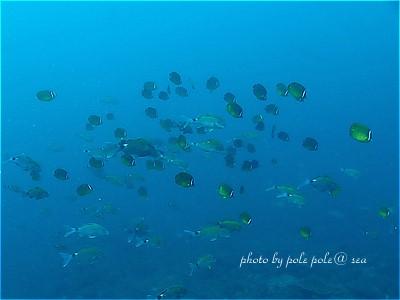f:id:polepole-at-sea:20200809005132j:plain