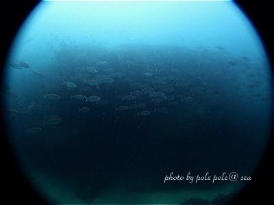 f:id:polepole-at-sea:20200809225232j:plain
