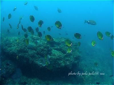 f:id:polepole-at-sea:20200809225520j:plain