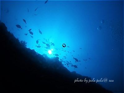 f:id:polepole-at-sea:20200813232302j:plain