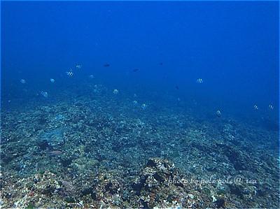 f:id:polepole-at-sea:20200817222943j:plain