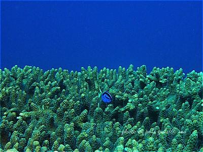 f:id:polepole-at-sea:20200819142829j:plain