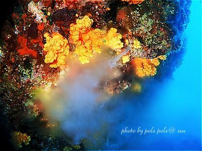 f:id:polepole-at-sea:20200819142904j:plain