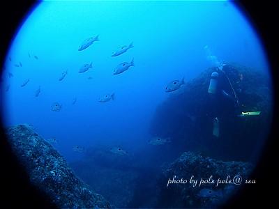 f:id:polepole-at-sea:20200821011907j:plain