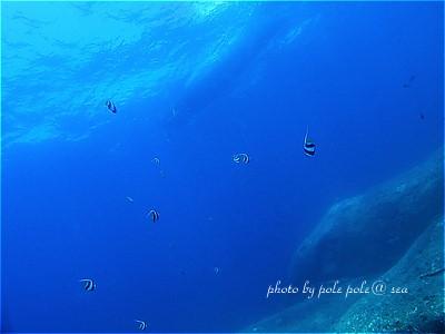 f:id:polepole-at-sea:20200901004524j:plain