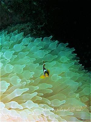 f:id:polepole-at-sea:20200912000259j:plain