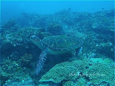 f:id:polepole-at-sea:20200915081940j:plain