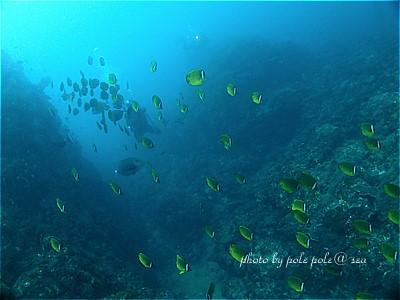 f:id:polepole-at-sea:20200915215729j:plain