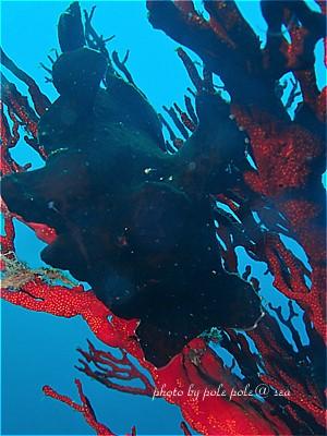 f:id:polepole-at-sea:20200923142333j:plain