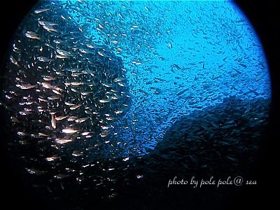 f:id:polepole-at-sea:20201016234121j:plain