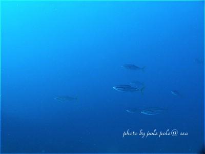 f:id:polepole-at-sea:20201016234308j:plain