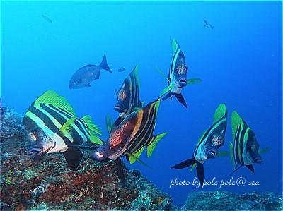 f:id:polepole-at-sea:20201020201012j:plain