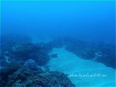 f:id:polepole-at-sea:20201020201807j:plain