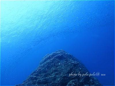 f:id:polepole-at-sea:20201120004521j:plain