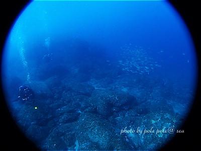 f:id:polepole-at-sea:20201123192139j:plain