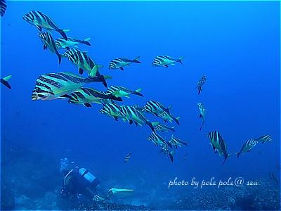 f:id:polepole-at-sea:20201228094214j:plain