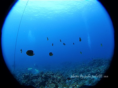 f:id:polepole-at-sea:20201228094311j:plain