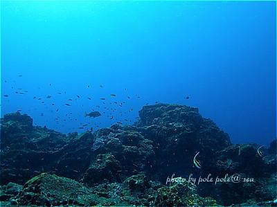 f:id:polepole-at-sea:20210213102319j:plain