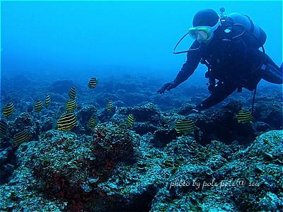 f:id:polepole-at-sea:20210220181347j:plain
