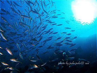 f:id:polepole-at-sea:20210220200213j:plain