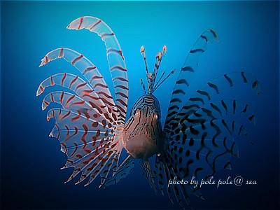 f:id:polepole-at-sea:20210220200251j:plain