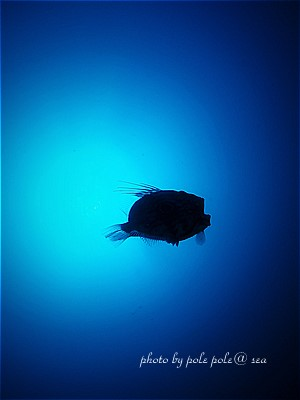 f:id:polepole-at-sea:20210220200545j:plain
