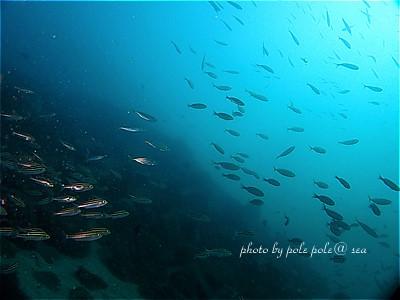 f:id:polepole-at-sea:20210314001124j:plain