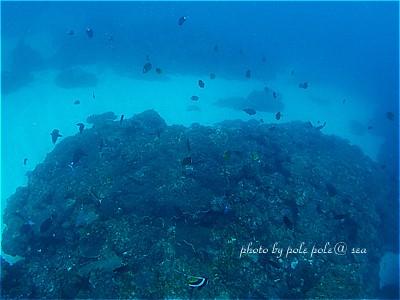 f:id:polepole-at-sea:20210314235347j:plain
