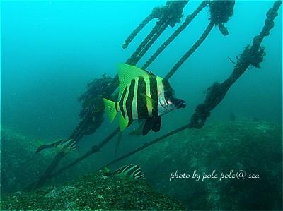 f:id:polepole-at-sea:20210321104454j:plain