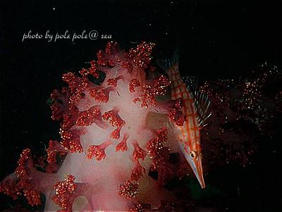 f:id:polepole-at-sea:20210321104800j:plain