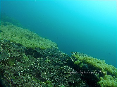 f:id:polepole-at-sea:20210327201025j:plain