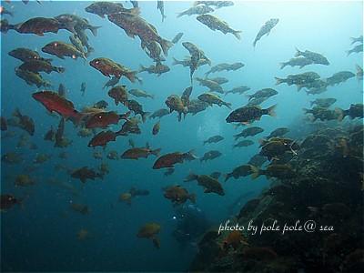 f:id:polepole-at-sea:20210327201119j:plain